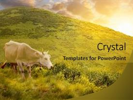 Presentation having grazing on meadow in mountain background and a gold colored foreground.