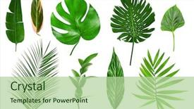Cool new slides with green - different tropical leaves on white backdrop and a mint green colored foreground