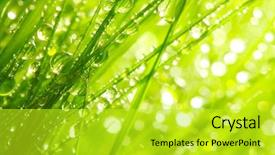 Theme consisting of green - fresh morning dew on spring background and a yellow colored foreground