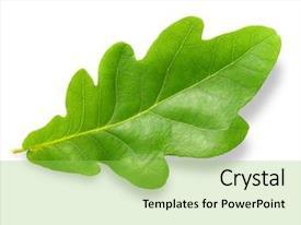 5000+ Oak PowerPoint Templates w/ Oak-Themed Backgrounds