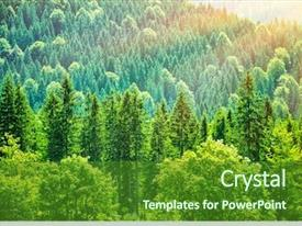 Unduh 50 Background Power Point Hutan Gratis Terbaik