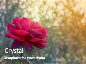 4000 funeral memorial powerpoint templates w funeral memorial