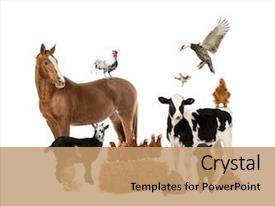 Animals Powerpoint Templates Orgsan Celikdemirsan Com