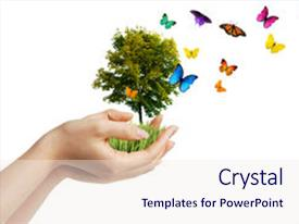 Slide deck enhanced with hands holding a tree background and a  colored foreground.