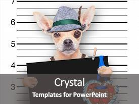 Cool new theme with hat mugshot at police backdrop and a dark gray colored foreground.