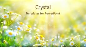 PPT layouts with health - chamomile flowers field wide background background and a cream colored foreground