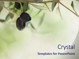 Amazing slides having healthy food - summer olives design background backdrop and a  colored foreground.