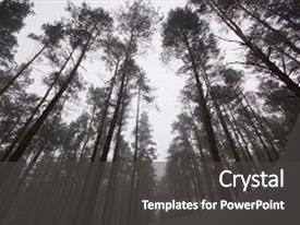 Theme enhanced with poland - high and dark pine forest background and a dark gray colored foreground