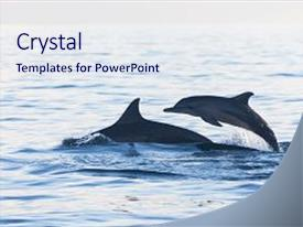 5000 dolphin powerpoint templates w dolphin themed backgrounds