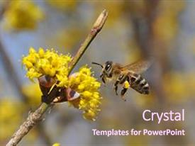 Cool new presentation theme with honey bee collecting nectar backdrop and a violet colored foreground.
