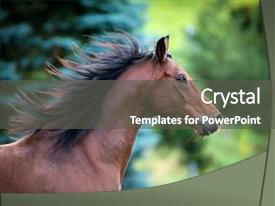 PPT layouts enhanced with horse portrait on green background background and a dark gray colored foreground.