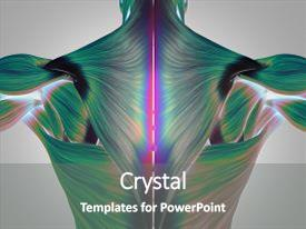 Cool new theme with human anatomy torso back muscles pain 3d illustration backdrop and a gray colored foreground