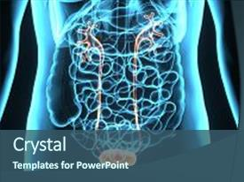 10 highlighted urinary system powerpoint templates w highlighted ppt theme consisting of human body highlighted urinary system background and a ocean colored foreground toneelgroepblik Image collections
