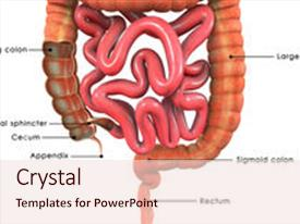 1000 gastrointestinal powerpoint templates w gastrointestinal ppt theme featuring human tract is background and a lemonade colored foreground toneelgroepblik Choice Image