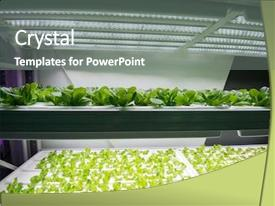 Hydroponic Farm Powerpoint Templates W Hydroponic Farm Themed Backgrounds