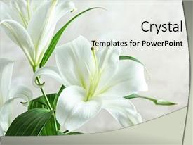 PPT layouts having jesus - beautiful white lilies on light background and a sky blue colored foreground