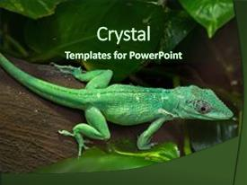 5000 knight powerpoint templates w knight themed backgrounds cool new ppt theme with knight anole anolis equestris also backdrop and a tawny brown colored toneelgroepblik Choice Image