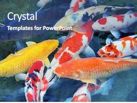 Koi Fish Powerpoint Templates W Koi Fish Themed Backgrounds Page 2