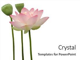 5000 Lotus Flower Powerpoint Templates W Lotus Flower Themed