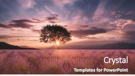 Presentation design with lavender field at sunset background and a red colored foreground