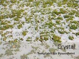 Presentation featuring lawn grass under snow background and a light gray colored foreground.