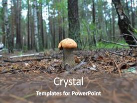5000 mushroom powerpoint templates w mushroom themed backgrounds cool new ppt theme with leccinum photo forest backdrop and toneelgroepblik Image collections
