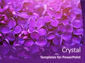 PPT theme with lilac flowers spring floral background background and a violet colored foreground.