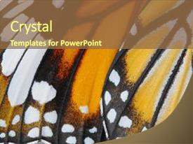 PPT theme enhanced with invertebrate - macro butterfly wing background common background and a tawny brown colored foreground.