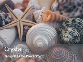 Amazing presentation having macro view of seashell background starfish on seashells background many different seashells texture and background natural background and texture for designers seashell collection backdrop and a gray colored foreground.