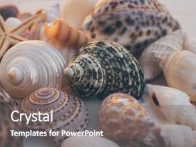 Presentation with macro view of seashell background starfish on seashells background many different seashells texture and background natural background and texture for designers seashell collection background and a gray colored foreground.