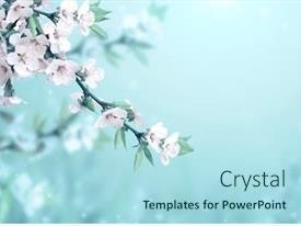 Amazing presentation design having magical-scene-with-cherry-flowers backdrop and a light blue colored foreground