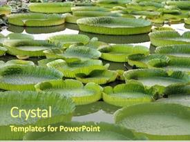 Amazon Forest Powerpoint Templates W Amazon Forest Themed