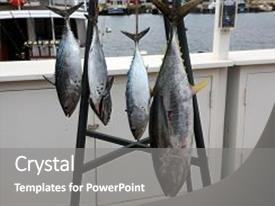 Cool new theme with medium-sized perciform fish backdrop and a gray colored foreground.