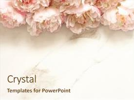 PPT layouts enhanced with minimalist floral background with peonies background and a cream colored foreground.