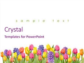 Cool new PPT layouts with mother nature - flower backdrop and a pink colored foreground.