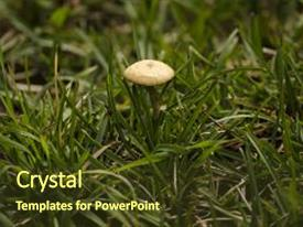 5000 mushroom powerpoint templates w mushroom themed backgrounds ppt theme featuring edible a large background and a tawny toneelgroepblik Image collections