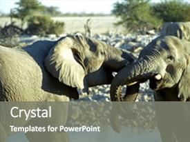 Cool new presentation theme with namibia s etosha national park backdrop and a gray colored foreground.