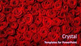Slides featuring natural red roses background background and a crimson colored foreground