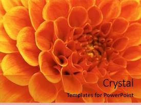 Presentation theme enhanced with orange - abstract flower background and a red colored foreground