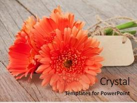 Cool new presentation with orange gerbera flowers with tag backdrop and a coral colored foreground