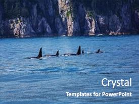 500 orca powerpoint templates w orca themed backgrounds theme enhanced with killer whale in alaska background and a teal colored foreground toneelgroepblik Images