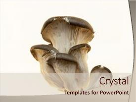 5000 mushroom powerpoint templates w mushroom themed backgrounds amazing ppt layouts having oyster s fresh s on backdrop toneelgroepblik Image collections