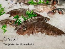 Slide deck featuring dinner sale - pagrus pagrus seabream fish background and a light gray colored foreground.