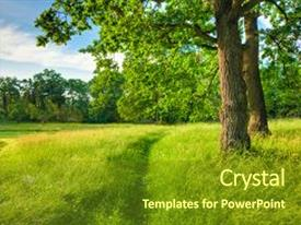 Colorful presentation theme enhanced with pathway nature wood sunlight background backdrop and a  colored foreground.