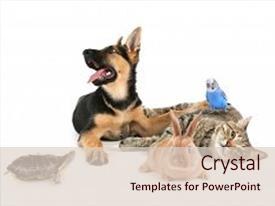 PPT theme enhanced with animals - pets on white background background and a lemonade colored foreground.
