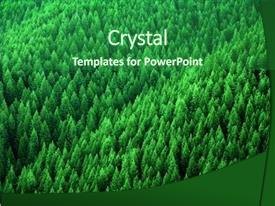 Presentation theme having pine trees in wilderness background and a forest green colored foreground