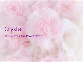 Top Pink Soft Powerpoint Templates Backgrounds Slides And Ppt Themes