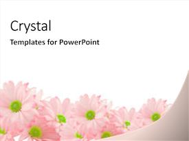 Amazing slide deck having pink daisies with copy-space backdrop and a white colored foreground.