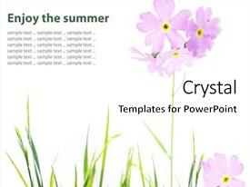 Beautiful PPT theme featuring plant design - summer flora backdrop and a white colored foreground