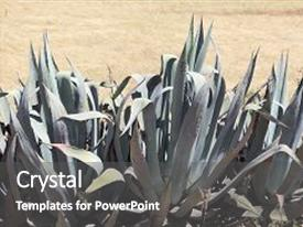 5000 americana powerpoint templates w americana themed backgrounds beautiful presentation theme featuring american aloe agave americana backdrop and a dark gray colored foreground toneelgroepblik Image collections